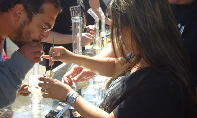 Cannabis Cup Lands in Northern California