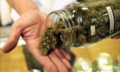 Michigan as a Cannabis Battleground