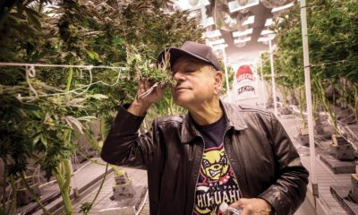 Still 'Up in Smoke:' Cheech Returns to Cannabis Culture