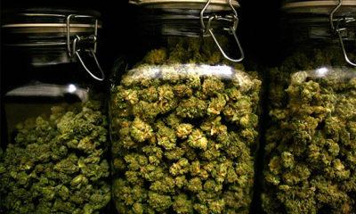 Colorado Announces Retail Marijuana Licensing Numbers