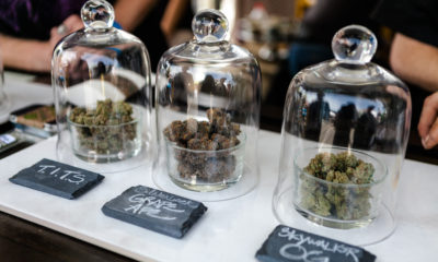 Cannabis Cup Drops Down in NorCal