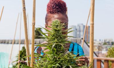 The International Cannabis Curio of The Dank Duchess