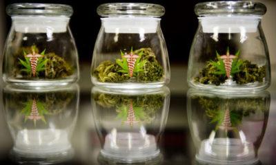 Medical Cannabis Will Appear on Florida Ballot