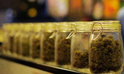 WA Recreational Cannabis Deadline Approaching
