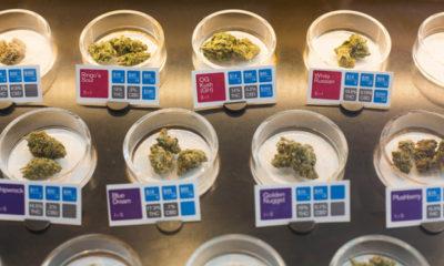 San Jose Cracks Down on Cannabis Dispensaries